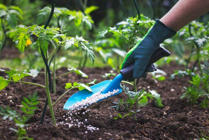 Ways to apply garden fertilizer green vision
